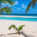 Tropical White Sand Beaches Vacation View by James BO Insogna