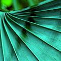 Tropical Wings by Susanne Van Hulst