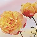 Tropicana Roses by Jan Baughman