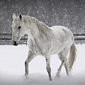 Trot In The Snow by Tina Meador