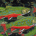 Trout Art Brook Trout Fish Artwork Giclee Wildlife Underwater by Baslee Troutman
