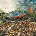 Trout Art Fish Art Brook Trout Suspended Artwork Giclee Fine Art Print by Baslee Troutman