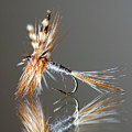 Trout Fly 2 by Glenn Gordon