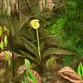 Trout Lily by FT McKinstry