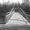 Trowbridge Falls Bridge Bw by Wild Rose Studio