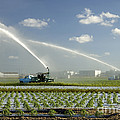 Truck Mounted Irrigation by Inga Spence