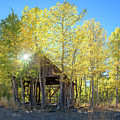 Truckee Shack Near Sunset During Early Autumn With Yellow And Green Leaves On The Trees by Brian Ball
