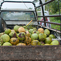 Truckload Of Coconuts by Carol Ailles