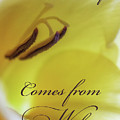 True Beauty Comes From Within by Marnie Patchett