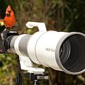 True Bird Photographer by John Harmon
