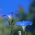 True Blue by Byron Varvarigos
