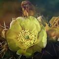 True Golden Beauty  by Saija Lehtonen