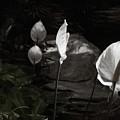 Trumpet Flower by Wayne King