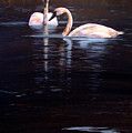 Trumpeter Swans by Karen Peterson