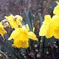 Trumpets Of Spring by Steve Karol