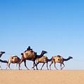 Tuareg Journey Across The Desert by Michael S. Lewis