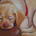 Tuckered Out by Patricia Kerns
