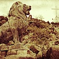 Tucson Lion by Alice Gipson