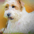 Tuffy The Russell Terrier by Rusty R Smith