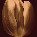 Tulip 1 by Jouko Lehto