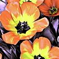 Tulip 16 by Pamela Cooper
