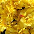 Tulip Bunching by Deborah  Crew-Johnson