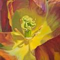 Tulip Closeup No. 1 by Kerima Swain