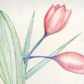 Tulip Colored Pencil Sketch