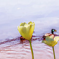 Tulip Duck #g1 by Leif Sohlman