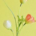Tulip Family by Kiran Joshi