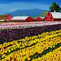 Tulip Fields by Brett Winn