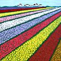 Tulip Fields by Frederic Kohli