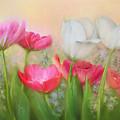 Tulip Garden by Bonnie Willis