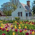 Tulip Garden  by Wayne Reynolds