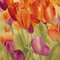Tulip Glory by Louise Magno
