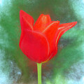 Tulip In Abstract. by William Morris