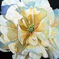 Tulip Intimate by Hanne Lore Koehler