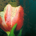 Tulip Of Love by Linda Sannuti
