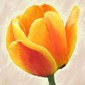 Tulip Orange by Diane Chandler