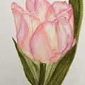 Tulip Watercolor Painting -triumph Tulip by Vinaya Kini