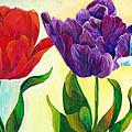 Tulip Rainbow by Sherry Shipley