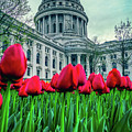 Tulip Row by Rockland Filmworks