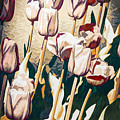 Tulip Sheltered by Dawn Dasharion