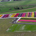 Tulip Town Aerial by Louise Magno
