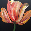 Tulip by Tracy Ann Delfar