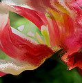 Tulip Wave And Ripple by Lyn  Perry