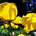 Tulipfest 5 by Will Borden