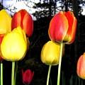 Tulipfest 9 by Will Borden