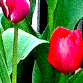 Tulips 2 by Ken Lerner