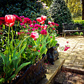 Tulips And Bench by Joan McCool
